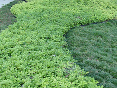 category-groundcovers