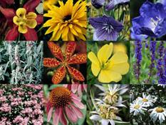 category-perennials