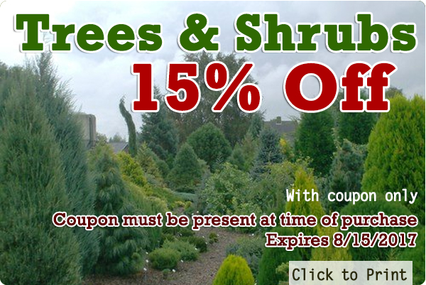 Evergreen Nursery Coupon Thenurseries