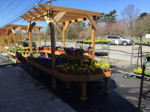 Plants & Nursery Store - Zainos Nursery Garden Center
