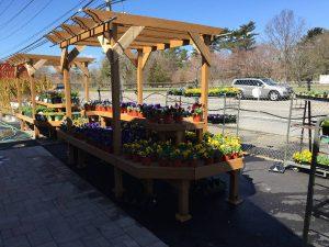 Plants & Nursery Store - Zainos Nursery Garden Center