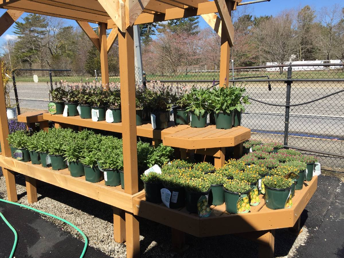 Plants Store - Zainos Nursery Garden Center