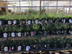 Plants Store - Zainos Nursery Garden Center