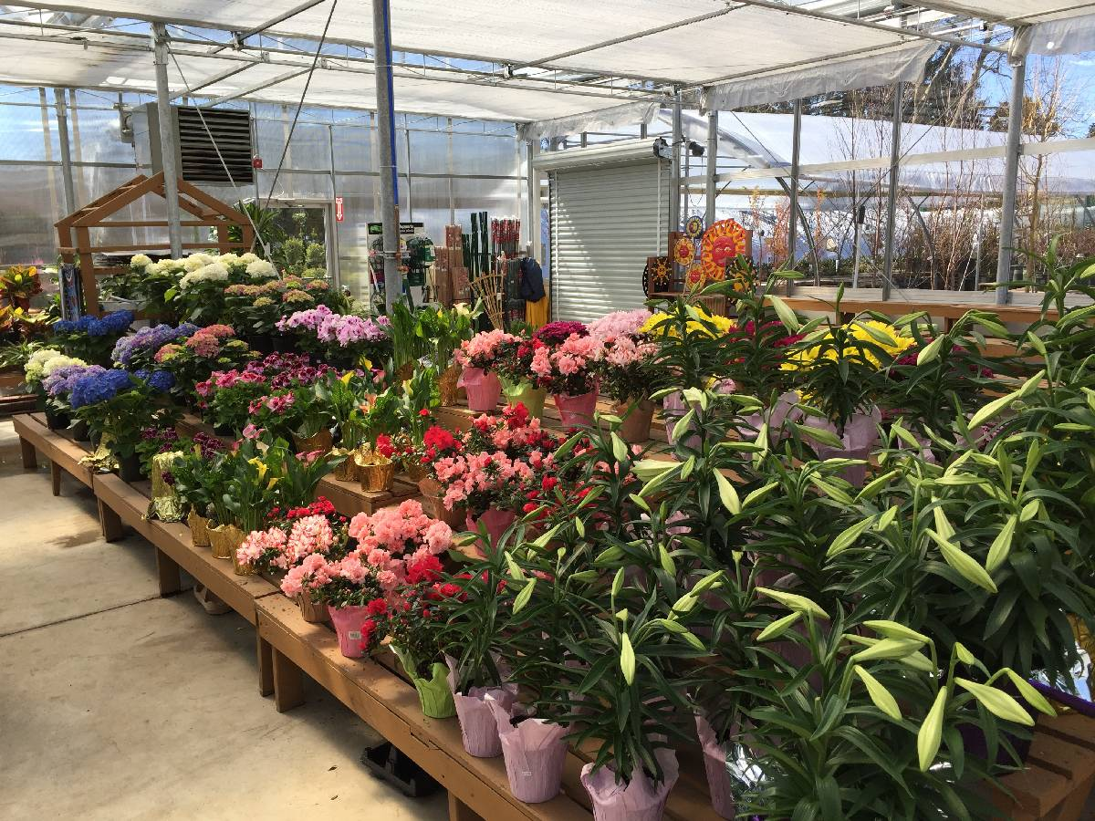 The Flower Boutique Nursery Zainos Garden Center