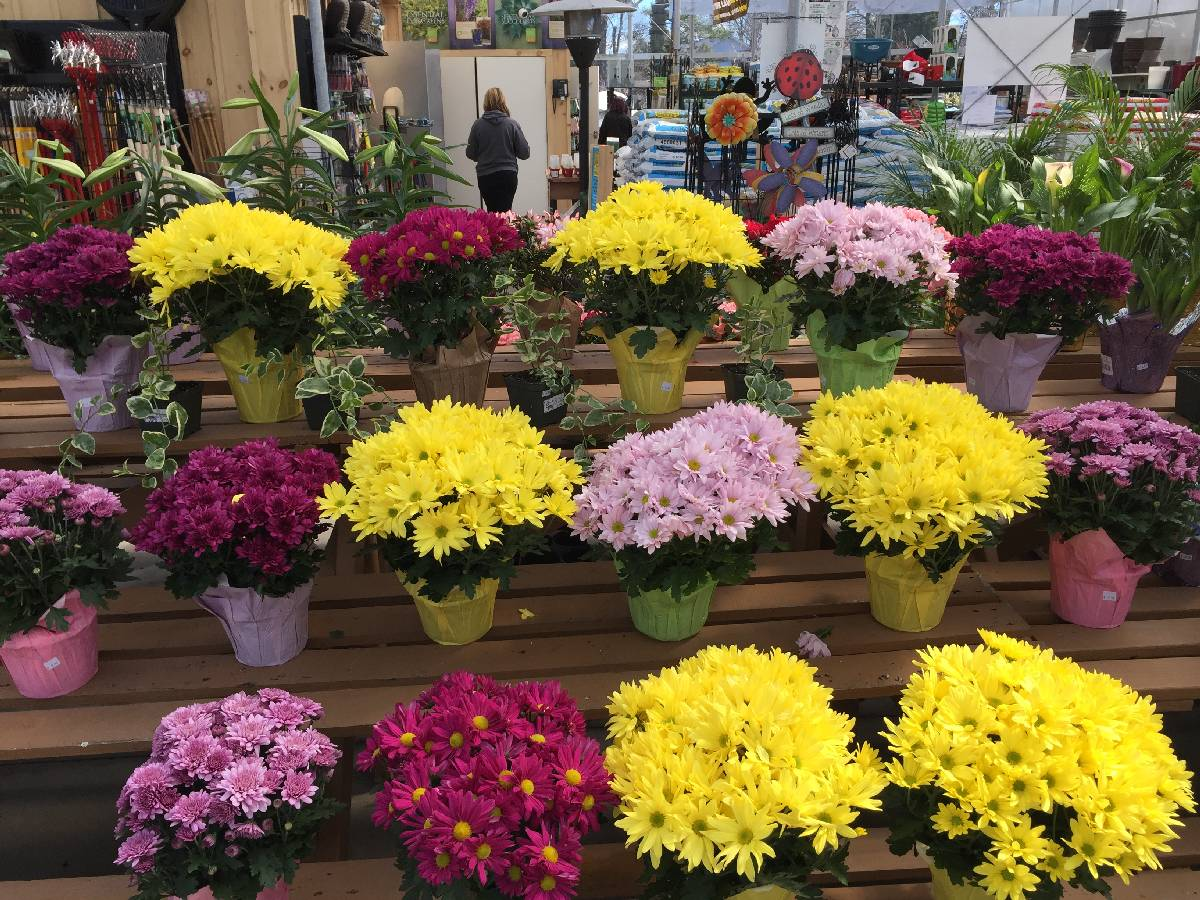 The Flower Boutique Store - Zainos nursery garden-center Jericho-Turnpike Westbury NewYork