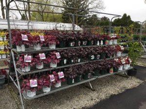 Zainos-Garden-Center-Westbury-NewYork