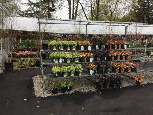 Zainos-Garden-Center-Westbury-NewYork-5