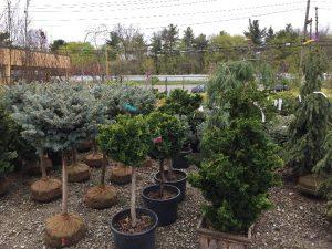 Zainos-Garden-Center-Westbury-NewYork-9