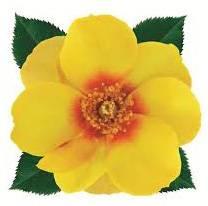 sweet-pot-yellow